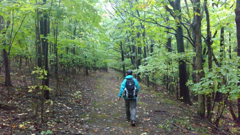 A hiker faces away from the camera, walking into the distance. On either side they are surrounded by young trees with bright green leaves.