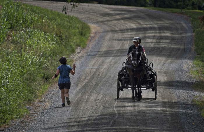 Horses - Western Loudoun