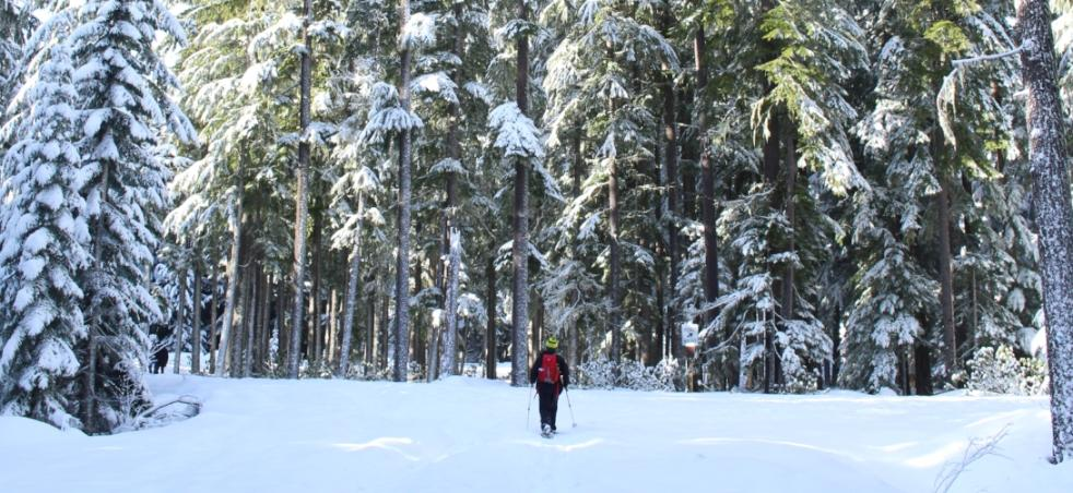 Winter Things To Do | Eugene, Cascades & Oregon Coast