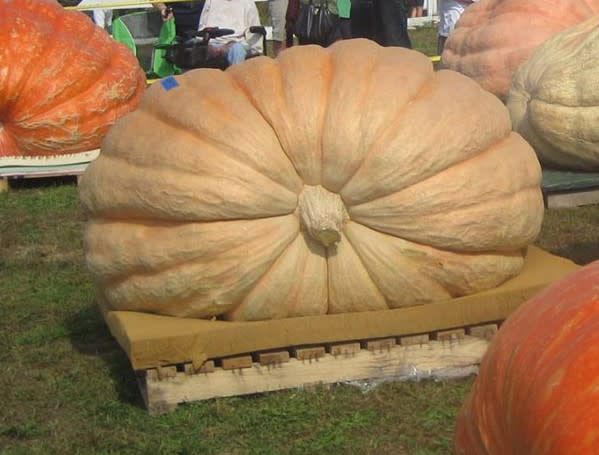 Giant Pumpkin Weigh Off