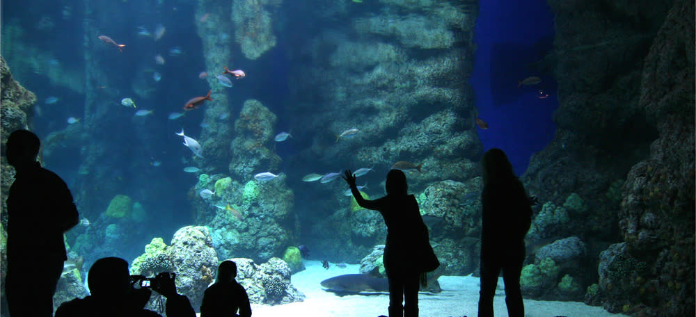People looking at fish at the Downtown Aquarium Denver