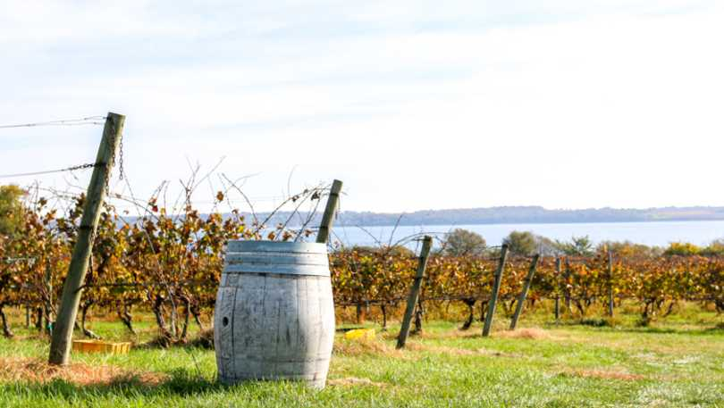 greenvale winery-portsmouth.jpg
