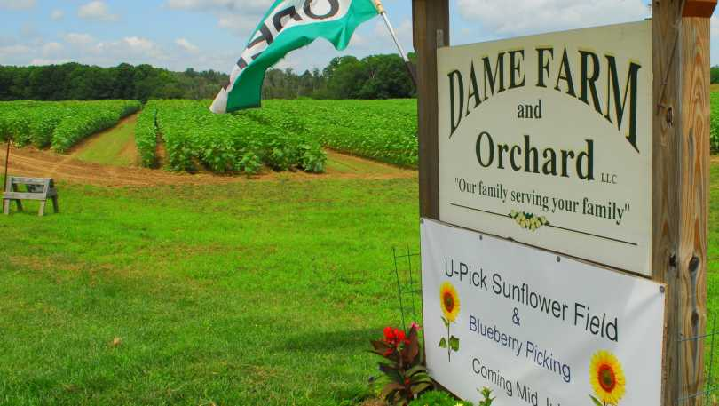 Dame Farm and Orchard