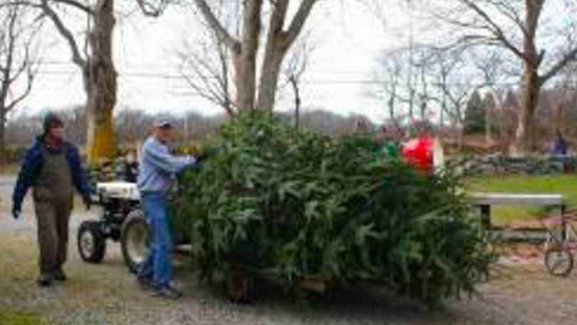 Maciels Tree Farm