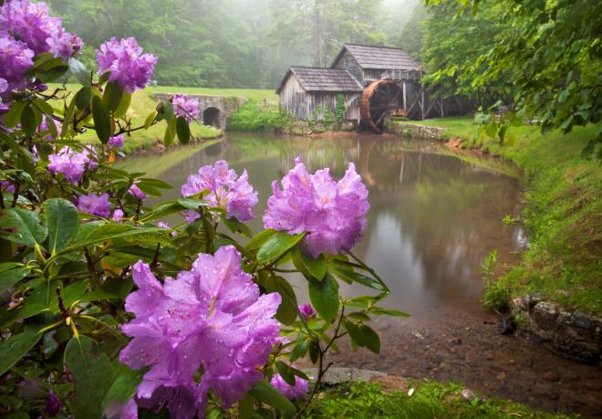 Mabry Mill Spring Flowers