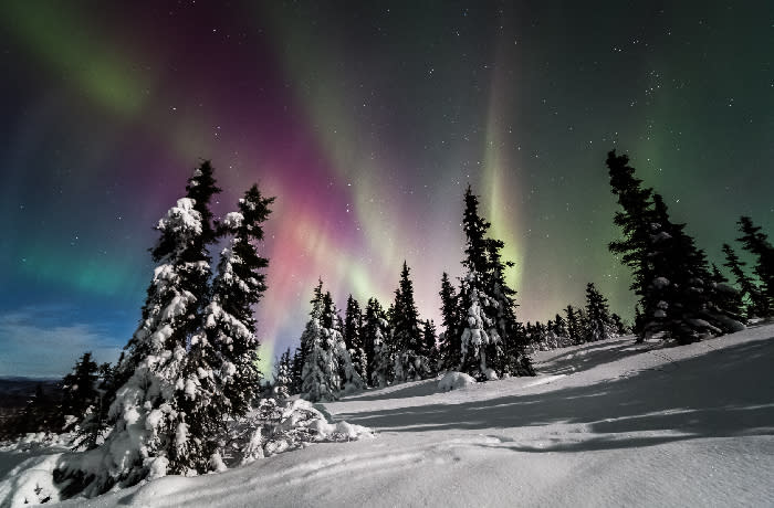 Solstice - aurora and snow covered trees