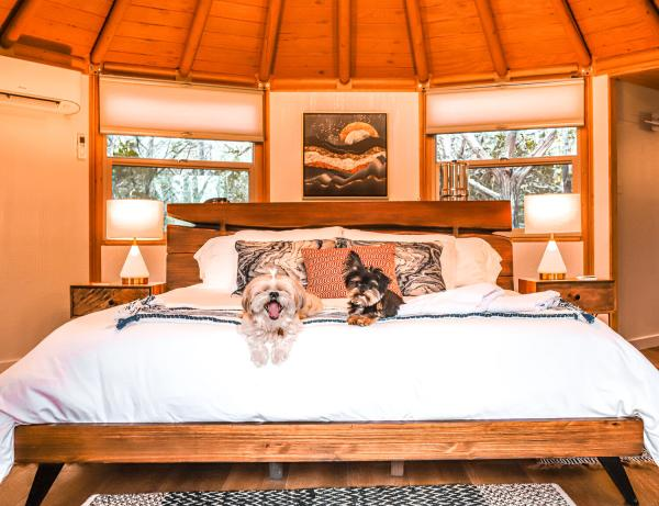 Amy Maples, two dogs on a bed