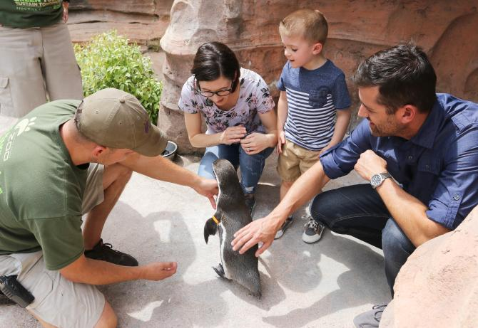 A family and zookeeper kneels down and pets a penguin at the Sedgwick County Zoo