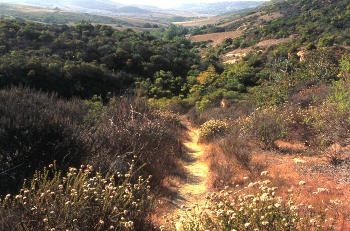 Hiking trail in Irvine's Open Space Reserve