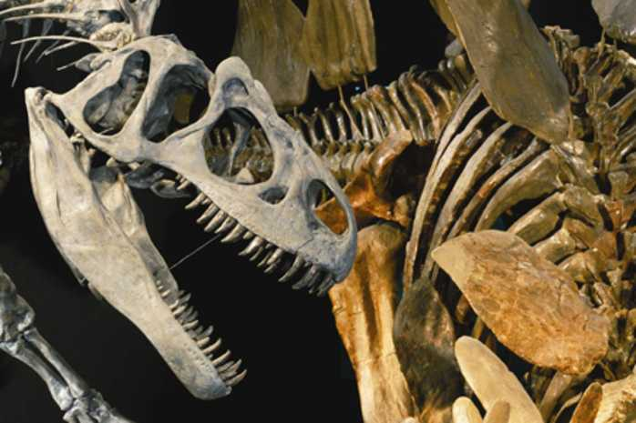 Theaters Museums Increasingly Catering >> Denver Museum Of Nature Science Dmns