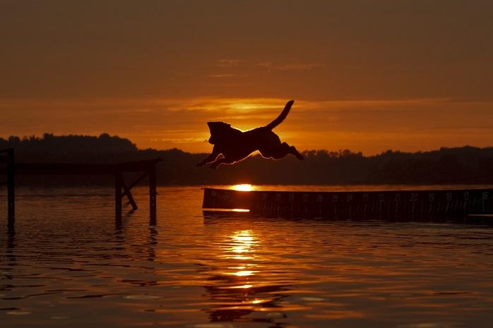 Dog Jumping in Lake During Sunset at Codorus State Park in York, PA