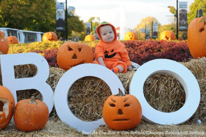 Baby in costume at the Boo! At The Zoo event in Chicago