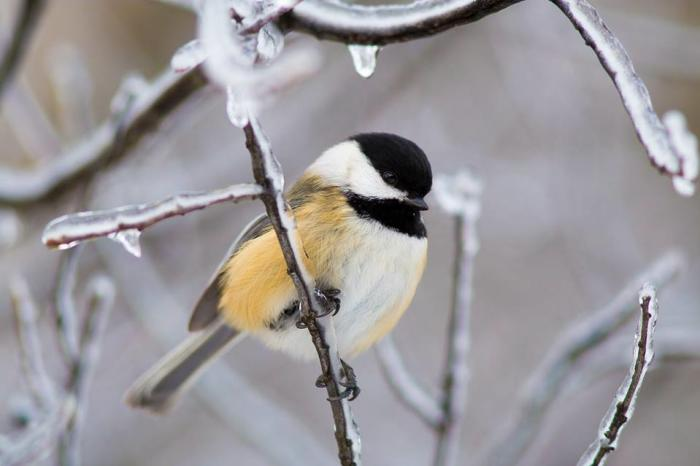 a small bird on an icy tree branch