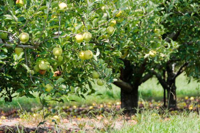 Fall Foodie blog - Scott's Orchard