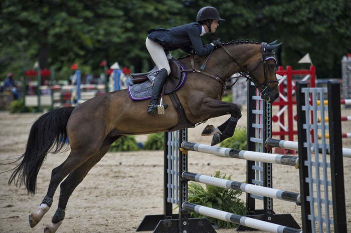Horse - UHS