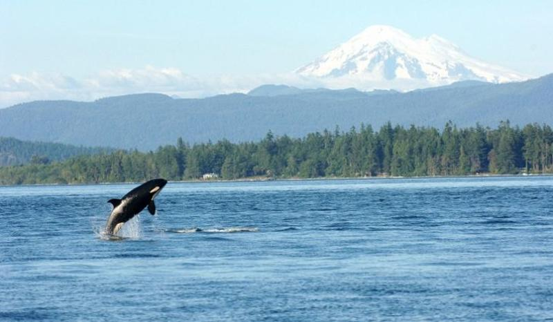 orca and Mt Rainier