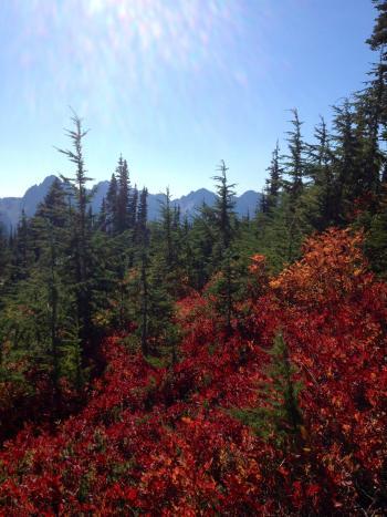 Paradise on Mt. Rainier in the fall