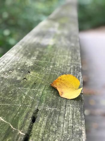Indian Run Falls Fall Leaves