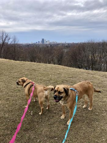 Dogs at Cobbs Hill Park in Rochester