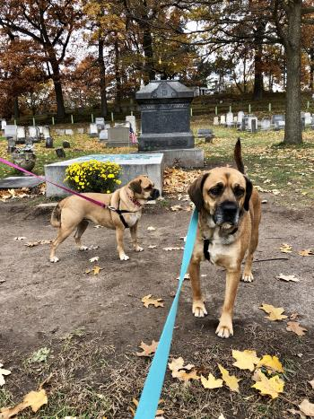 Dogs in Mount Hope Cemetery