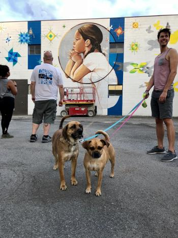 Dogs in Front of Mural in Rochester, NY