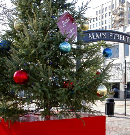 tree at Stroll on State