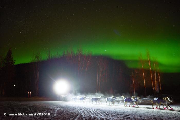 dog mushing aurora yukon quest sled dog