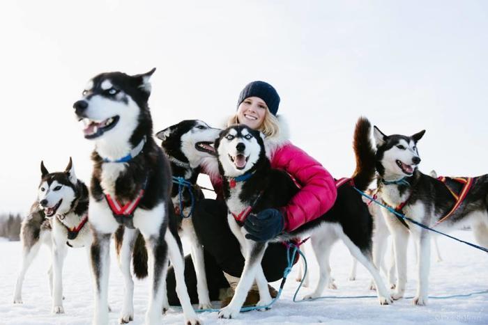 Arctic Dog Adventure Company Sled Dog Team