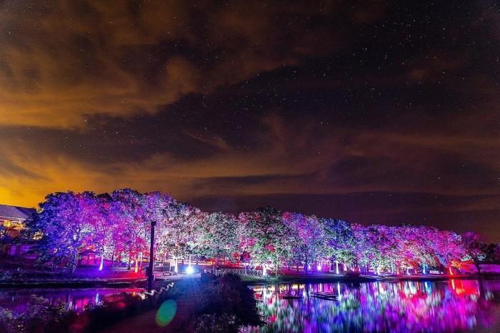 Tumbleweed Festival Lit Park