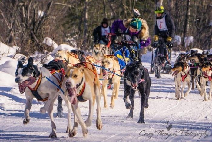 Team of sled dogs pulling musher in a sprint race