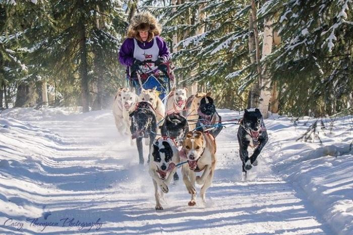 a female musher with a sled dog team on a trail racing in the woods
