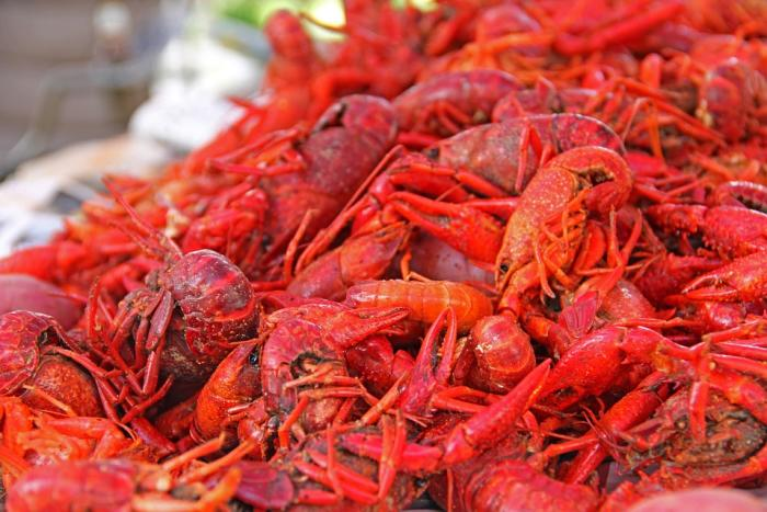 Crawfish close-up