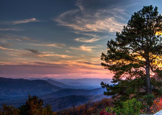 Pine Tree Overlook - Blue Ridge Parkway