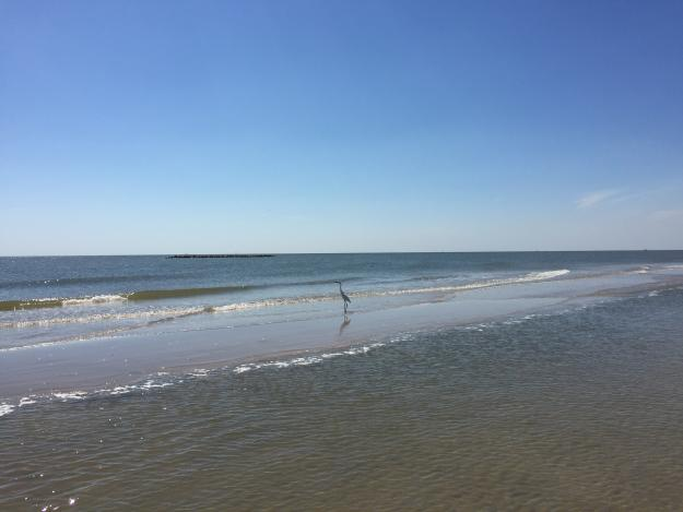 Creole Nature Trail   Beaches
