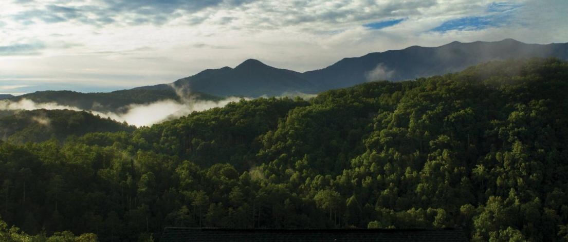 Mist rises through the green forest of the Great Smoky Mountains.