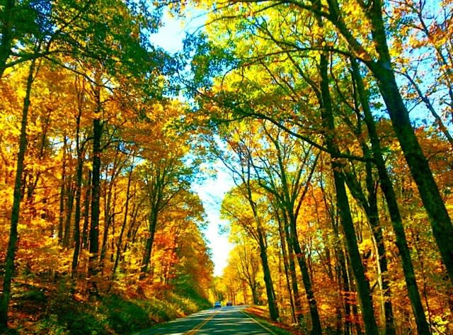 Driving Through Fall Colors - Fall Photo
