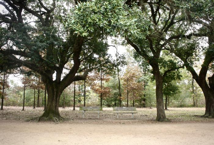 Trees and benches in Memorial Park in Houston