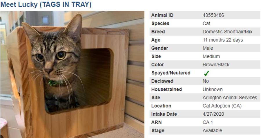 cat 1 adoption blog