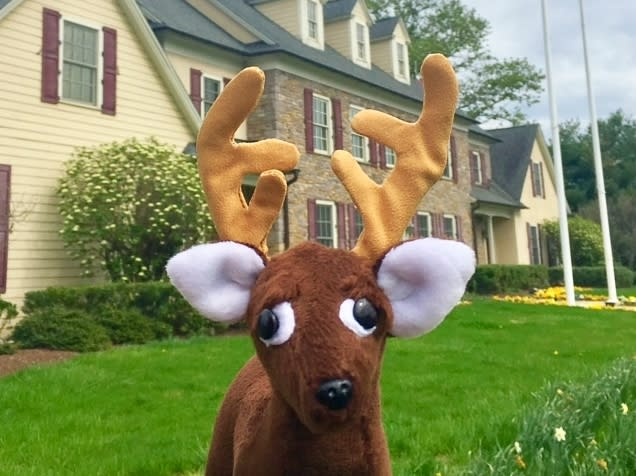 """Bucky"" at the Bucks County Visitor Center"