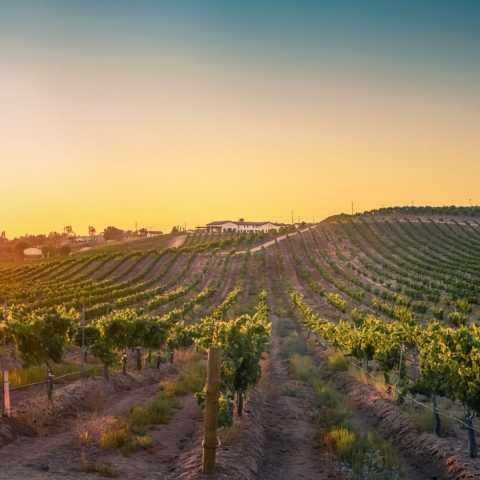 Avensole Winery