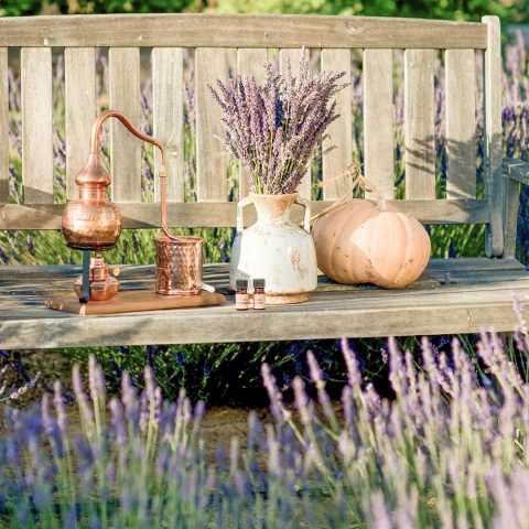 Temecula Lavender Co.
