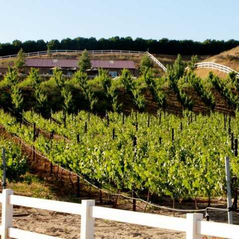 Frangipani Estate Winery