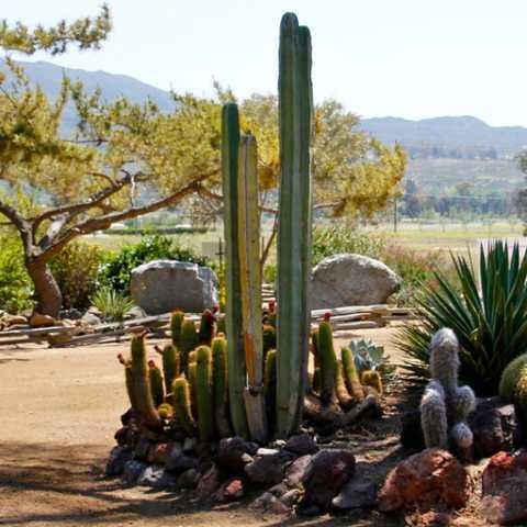 Landscape - Green Acres Ranch Inc.