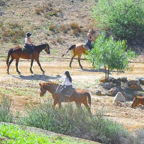 Horseback Riding - Green Acres Ranch Inc.