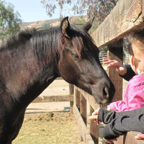 Petting Horses - Green Acres Ranch Inc.