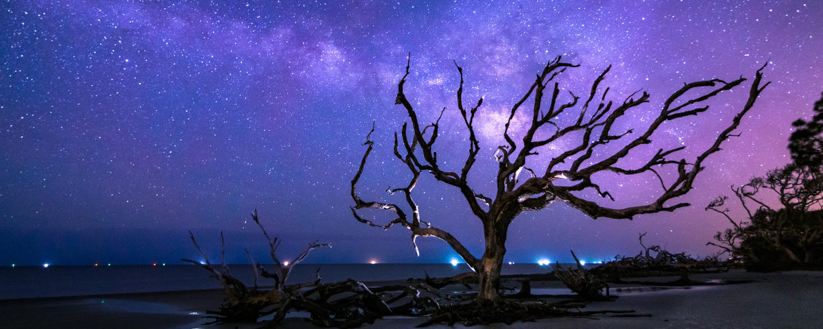The milky way shines above Driftwood Beach on Jekyll Island, Georgia