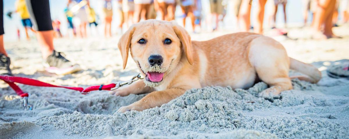 A puppy plays on the Georgia coast dog-friendly beaches in the Golden Isles