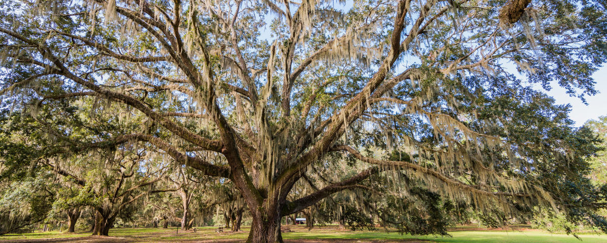 Can't-Miss Stops on Your I-95 Road Trip | Golden Isles, GA