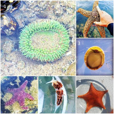 sea animals_1-6 web.jpg