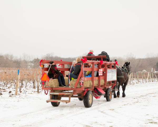 Ice Wine Festival, Casa Larga